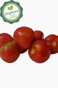 tomate_COOMAFITT