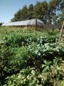 Plantação em Nova Santa Rita