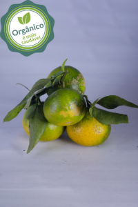 bergamota organica