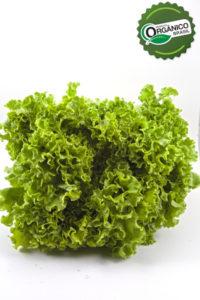 _EA_8031_alface crespa verde_com selo
